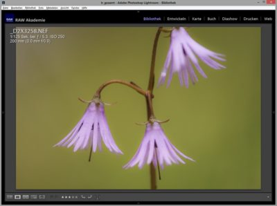 RAW Akademie: Grundlagen-Workshop Adobe Lightroom