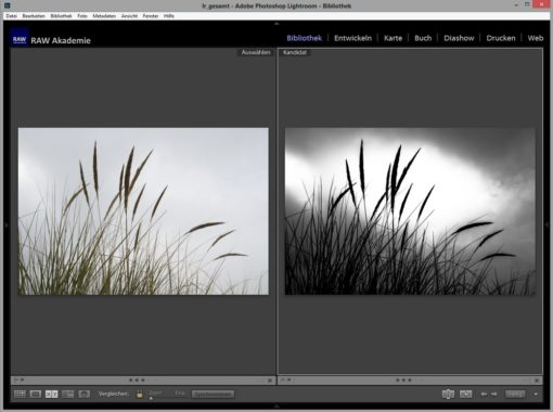 Lightroom on Demand: Kreative und selektive Bildbearbeitung